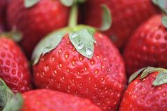Abstract background photography with close up macro with bright red fresh fruit strawberries with green leaf top royalty free stock images