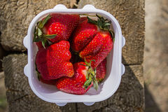 Juicy ripe red huge appetizing strawberry berries in a white plastic square container on a wooden texture background in the summer Royalty Free Stock Photography