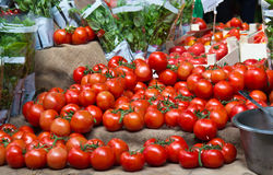 Juicy ripe red tomatos for sale at a vegetable market Royalty Free Stock Photo