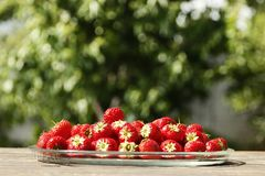 Juicy ripe strawberries against natural green background stock images