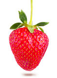 Juicy ripe strawberries Stock Images