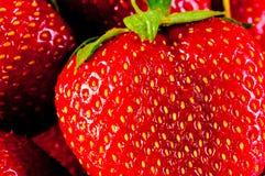 Juicy ripe strawberry closeup Royalty Free Stock Image
