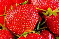 Juicy ripe strawberry closeup Stock Photos