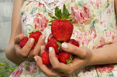 Juicy and ripe strawberry Stock Photography