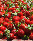 Juicy ripe strawberrys Royalty Free Stock Image