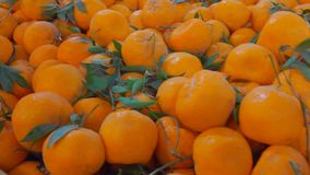 Juicy ripe tangerines in the fruit market. Juicy ripe tangerines on beautifully decomposed showcase in the fruit market stock video footage
