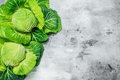 Juicy Savoy cabbage stock photo