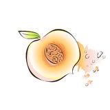 Juicy slice of apricot or peach. Vector illustration, on white. Juicy slice of apricot or peach. Vector illustration, on white background stock illustration