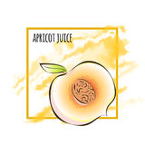 Juicy slice of apricot or peach. Vector illustration, on white. Juicy slice of apricot or peach on the background of yellow watercolor stain. Vector royalty free illustration