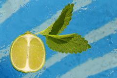 Juicy slice of lime and leaves of mint on an abstract background royalty free stock image