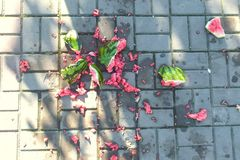 Juicy smashed watermelon broken on paving slabs. Pieces of watermelon on the land. stock image