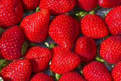 Juicy strawberry background. Group of juicy strawberry background Royalty Free Stock Photos