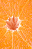 Juicy structure of an orange Royalty Free Stock Photo