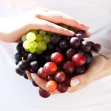 Juicy, sunny grapes in hand Stock Photography