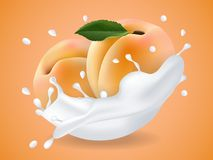 Juicy sweet apricot in milk splash. Milkshake with peach. Vector illustration Stock Image