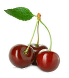 Juicy sweet cherry with leaf isolated on white Royalty Free Stock Photos