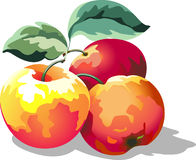 Juicy sweet red apples Stock Photos
