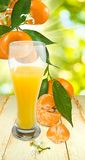 Juicy and tangerine Royalty Free Stock Image