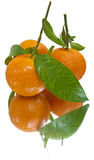 Juicy tangerines (isolated) Royalty Free Stock Images