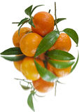 Juicy tangerines (isolated). Juicy tangerines just out of the box. Real mirror. Reflection in the mirror (glass thick) in some places is twofold Stock Image