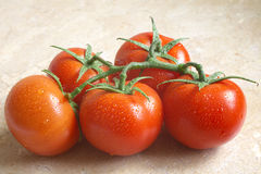 Juicy tomatoes Royalty Free Stock Images