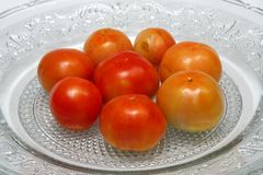 Juicy Tomatoes Stock Images