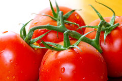 Juicy tomatoes Stock Image
