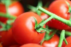 Juicy Tomatoes Stock Photos