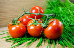 Juicy tomatoes. With fennel on wood background royalty free stock photo