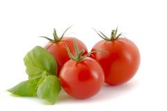 Juicy Tomatoes Stock Photography