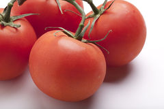 Juicy Tomatoes on the Vine Royalty Free Stock Photos