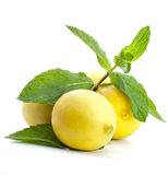 Juicy Tropical Lemon Stock Photo