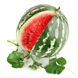 Juicy watermelon in cut with green leaf Stock Image