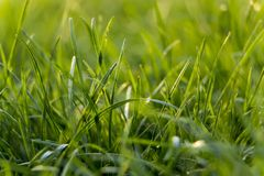 Juicy young grassy grass close-up Stock Photo