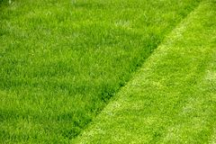 Juicy young grassy grass close-up Royalty Free Stock Image