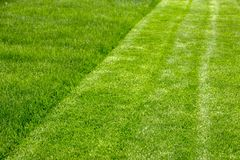 Juicy young grassy grass close-up Royalty Free Stock Photos