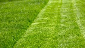 Juicy young grassy grass close-up Stock Photography
