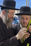 Juifs se préparant au succoth Images libres de droits