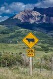 14 juillet 2016 - les bétail mettent en place avec des montagnes et des arbres verts - San Juan Mountains, le Colorado, Etats-Uni Photographie stock libre de droits