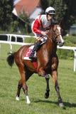 Juin Prix grand dans la course de chevaux à Prague Image stock