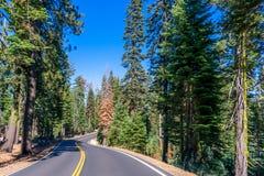 Juiste Gebogen Weg met een Blauw Hemel en een Bos stock fotografie