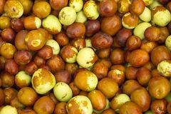 Ginjol or jujube - Ziziphus jujuba. Jujube is an exotic fruit that grows on the tree of the same name and is also known as jujube royalty free stock photography