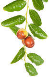 Jujube fruit Royalty Free Stock Images