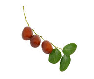 Jujube fruit on branch with leaves Royalty Free Stock Photography