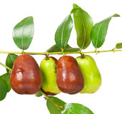 Jujube fruit Royalty Free Stock Image