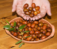 Jujube from the hands Royalty Free Stock Images