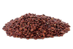 Jujube Seed Stock Images