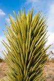 Jukki roślina Obrazy Stock