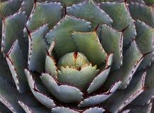 Jukki roślina Fotografia Royalty Free