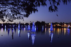 Jul dekorerade granträd i Orlando Arkivbild
